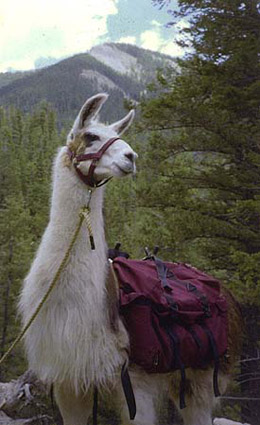 Llama Trekking in Taos and Santa Fe